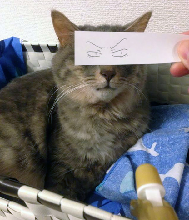 Gatos-com-olhos-de-desenhos-engraçados-é-a-nova-moda-no-Japão-Blog-Animal (25)
