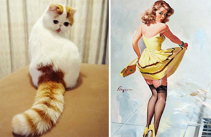 Gatos que se parecem com outras coisas (18)