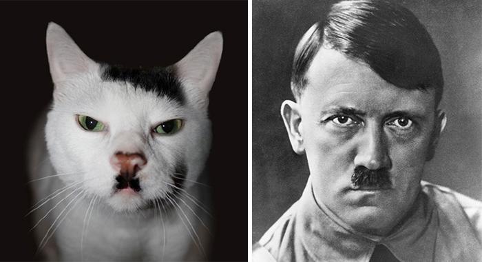 Gatos que se parecem com outras coisas (26)