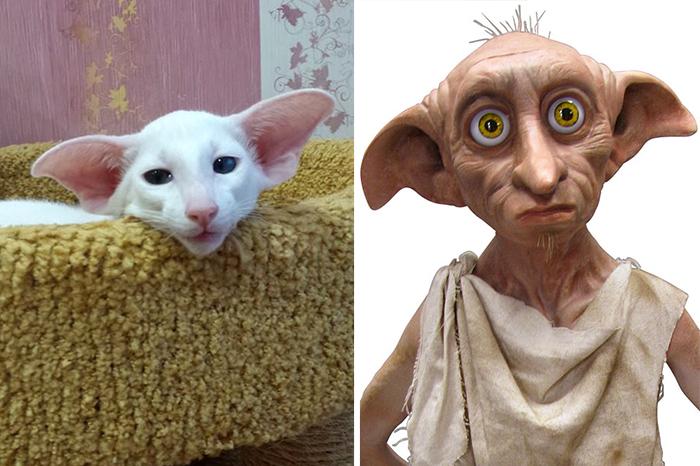 Gatos que se parecem com outras coisas (28)