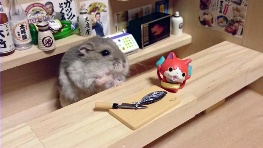 Hamster barman servindo mini alimentos e bebidas (14)