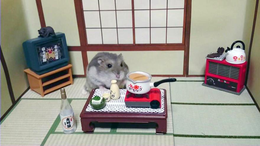Hamster barman servindo mini alimentos e bebidas (15)