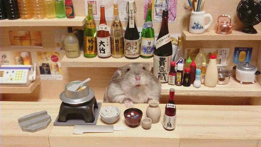 Hamster barman servindo mini alimentos e bebidas (16)