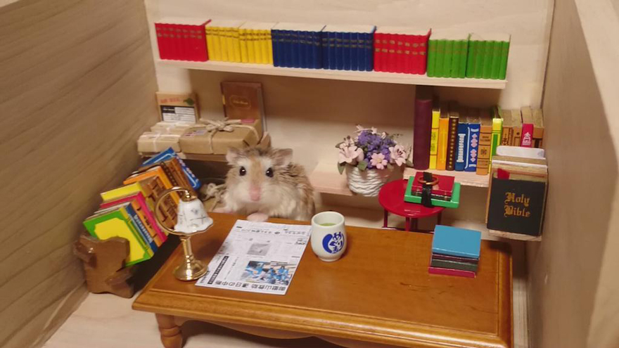 Hamster barman servindo mini alimentos e bebidas (5)