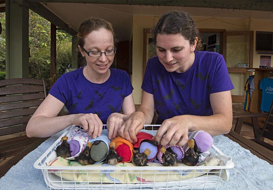 Hospital para morcegos na Austrália (3)