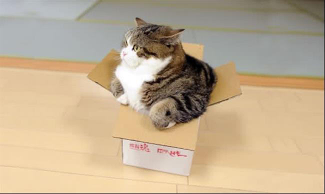Os-Gatos-Mais-Famosos-da-Internet-Blog-Animal (10)