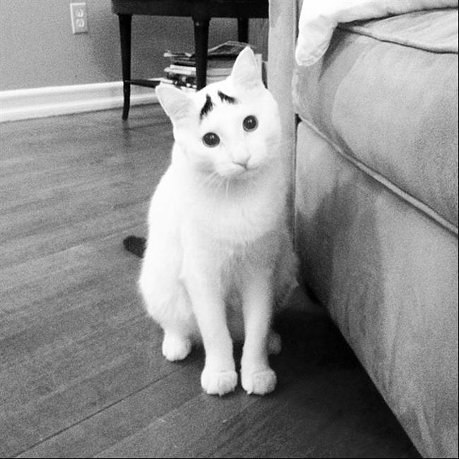 Os-Gatos-Mais-Famosos-da-Internet-Blog-Animal (11)