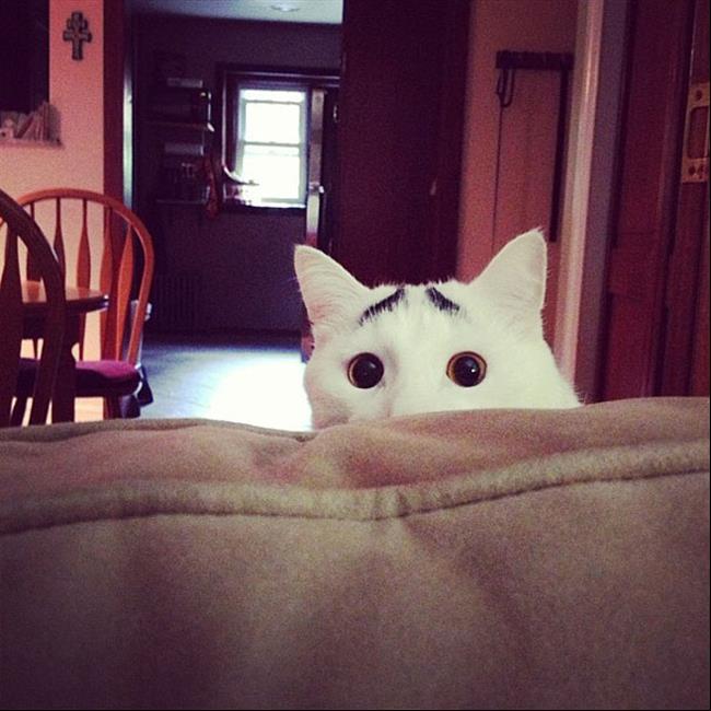 Os-Gatos-Mais-Famosos-da-Internet-Blog-Animal (12)