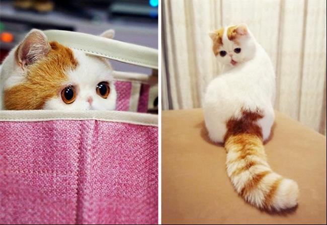 Os-Gatos-Mais-Famosos-da-Internet-Blog-Animal (14)