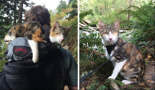 Os-Gatos-Mais-Famosos-da-Internet-Blog-Animal (16)
