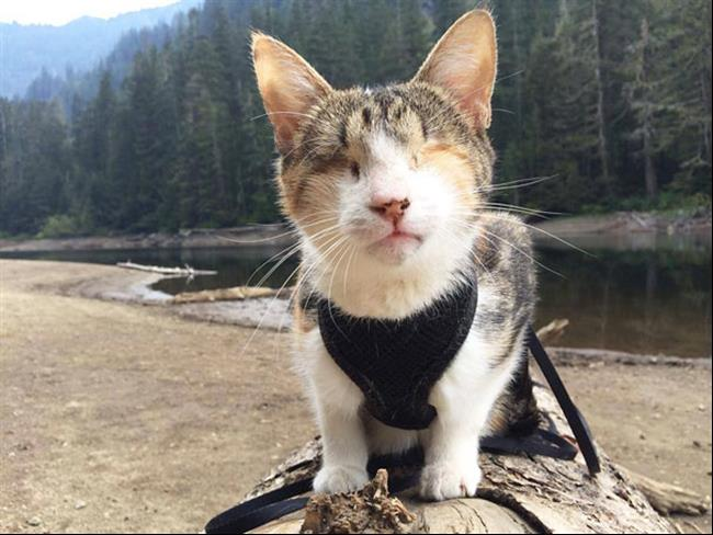 Os-Gatos-Mais-Famosos-da-Internet-Blog-Animal (17)
