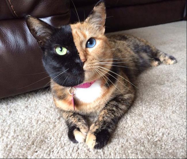 Os-Gatos-Mais-Famosos-da-Internet-Blog-Animal (20)