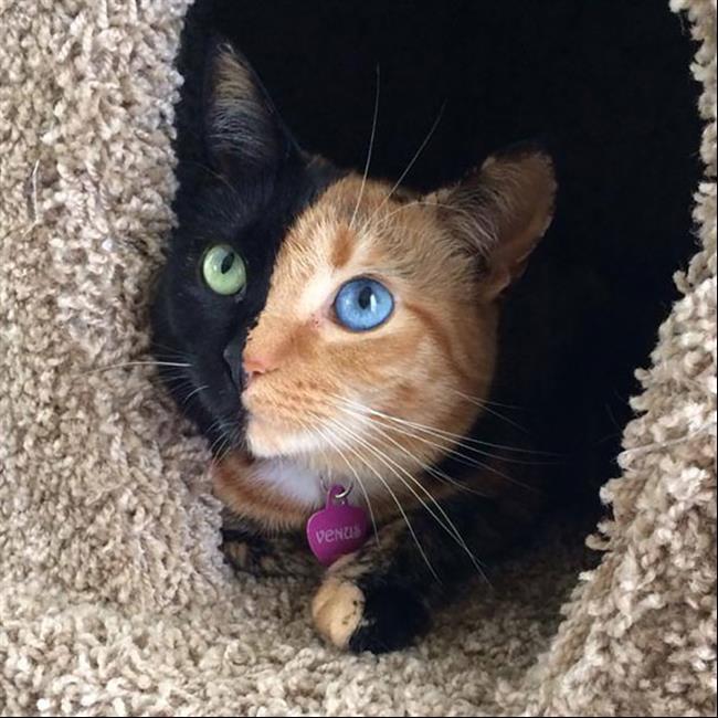 Os-Gatos-Mais-Famosos-da-Internet-Blog-Animal (21)