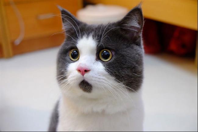 Os-Gatos-Mais-Famosos-da-Internet-Blog-Animal (22)
