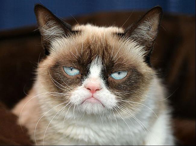 Os-Gatos-Mais-Famosos-da-Internet-Blog-Animal (24)
