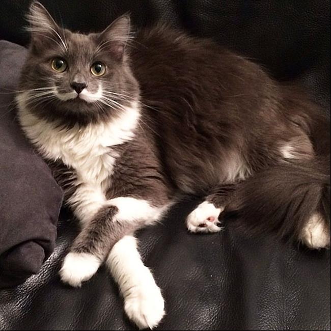 Os-Gatos-Mais-Famosos-da-Internet-Blog-Animal (28)