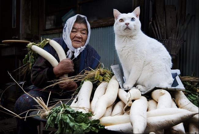 Os-Gatos-Mais-Famosos-da-Internet-Blog-Animal (30)