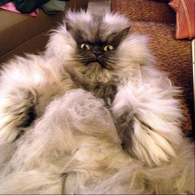 Os-Gatos-Mais-Famosos-da-Internet-Blog-Animal (34)
