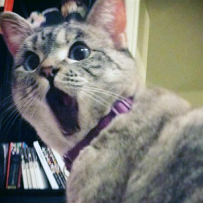 Os-Gatos-Mais-Famosos-da-Internet-Blog-Animal (38)