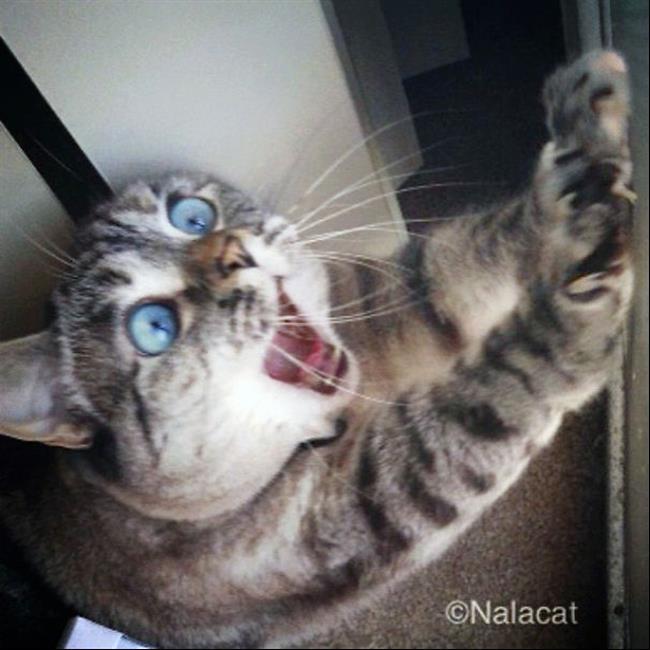 Os-Gatos-Mais-Famosos-da-Internet-Blog-Animal (39)