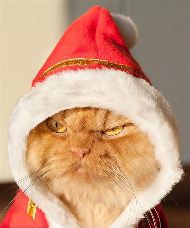 Os-Gatos-Mais-Famosos-da-Internet-Blog-Animal (4)