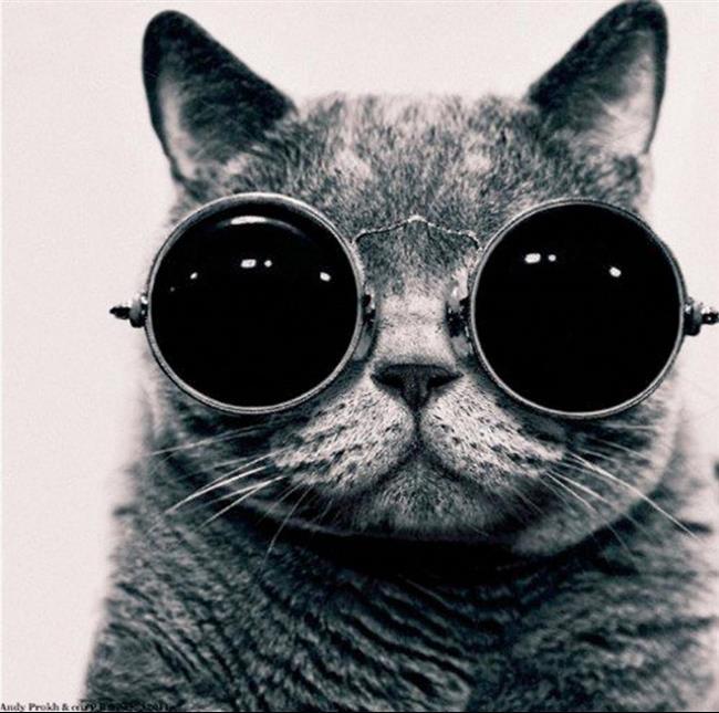 Os-Gatos-Mais-Famosos-da-Internet-Blog-Animal (41)