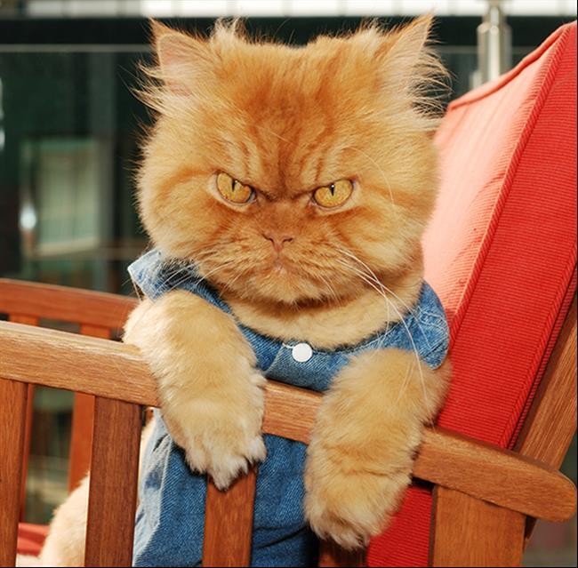 Os-Gatos-Mais-Famosos-da-Internet-Blog-Animal (5)