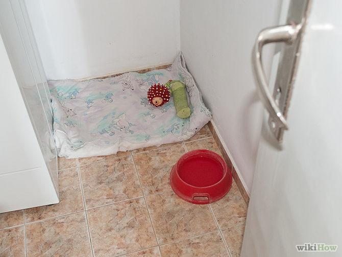 10-Dicas-para-proteger-seu-cachorro-do-barulho-dos-fogos-de-artifício-Blog-Animal (3)
