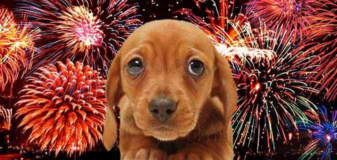 10-Dicas-para-proteger-seu-cachorro-do-barulho-dos-fogos-de-artifício-Blog-Animal (4)
