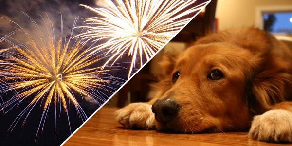10-Dicas-para-proteger-seu-cachorro-do-barulho-dos-fogos-de-artifício-Blog-Animal (5)