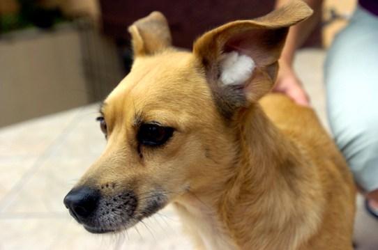10-Dicas-para-proteger-seu-cachorro-do-barulho-dos-fogos-de-artifício-Blog-Animal (6)