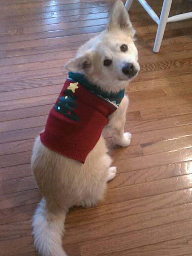 18-Cães-com-roupas-de-Natal-Blog-Animal (1)