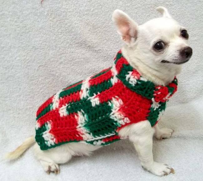 18-Cães-com-roupas-de-Natal-Blog-Animal (12)