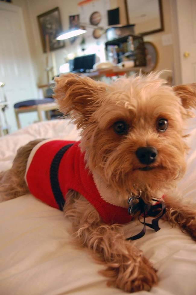 18-Cães-com-roupas-de-Natal-Blog-Animal (14)