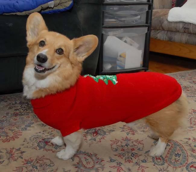 18-Cães-com-roupas-de-Natal-Blog-Animal (16)