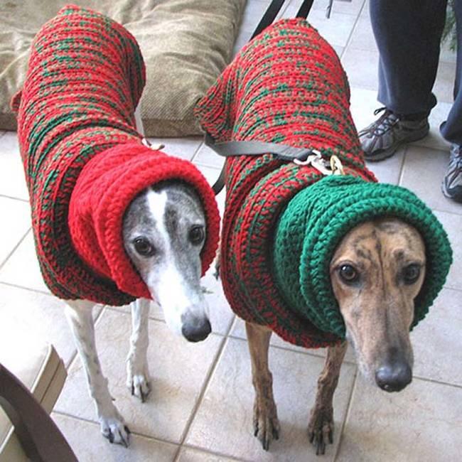 18-Cães-com-roupas-de-Natal-Blog-Animal (2)