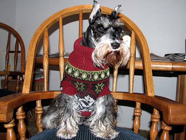 18-Cães-com-roupas-de-Natal-Blog-Animal (5)