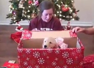 A prova definitiva de que filhotes de cachorros são os melhores presentes do mundo