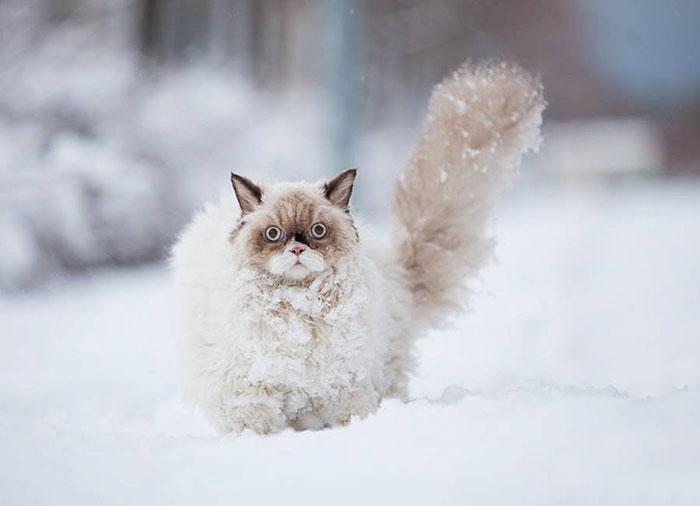 Animais brincando na neve pela primeira vez (1)