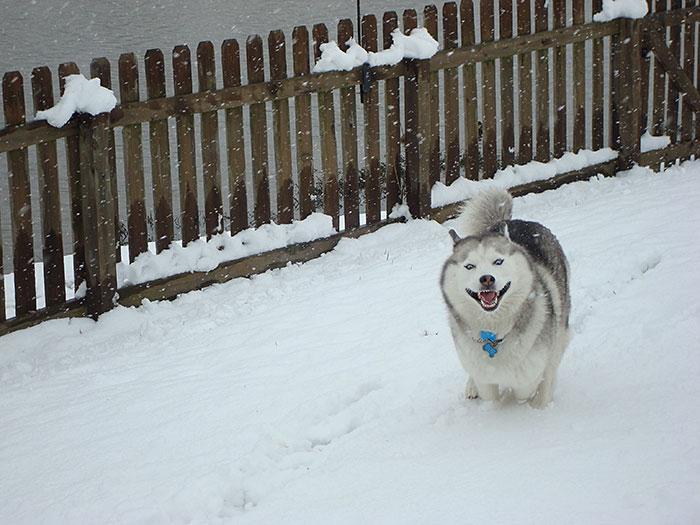 Animais brincando na neve pela primeira vez (15)