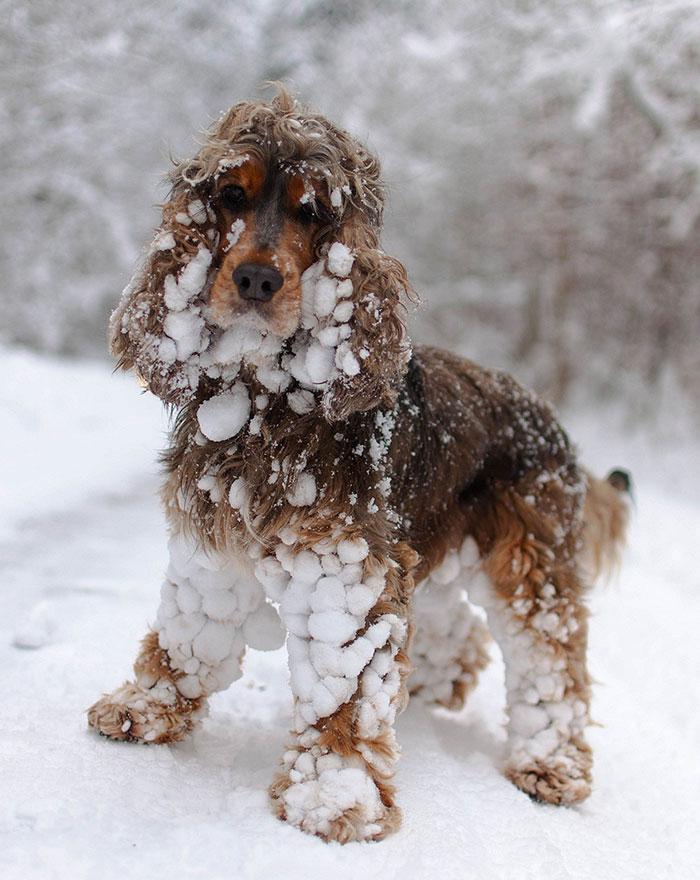 Animais brincando na neve pela primeira vez (16)