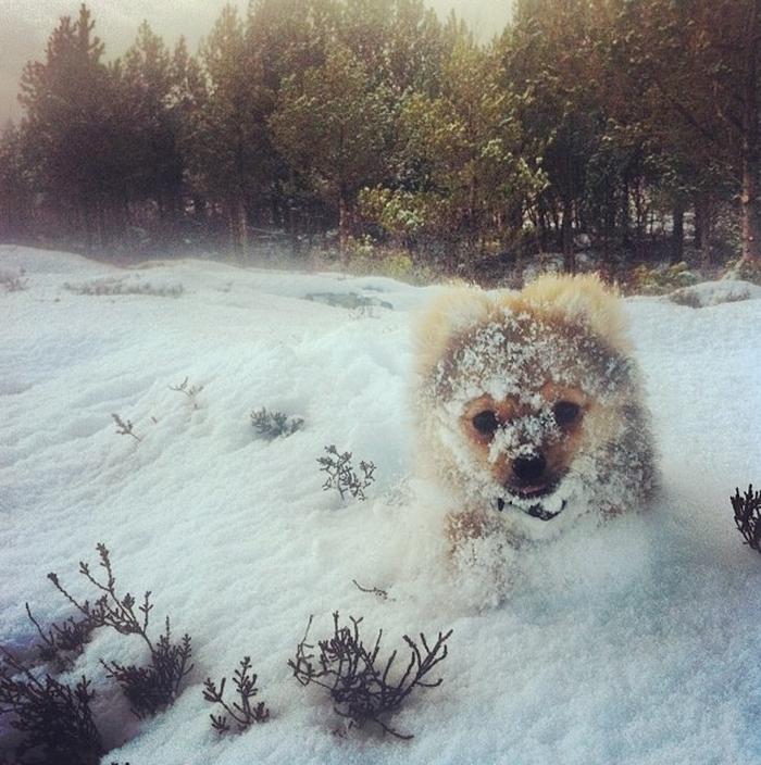 Animais brincando na neve pela primeira vez (19)
