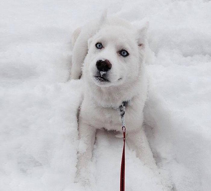 Animais brincando na neve pela primeira vez (2)