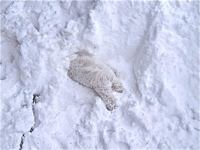 Animais brincando na neve pela primeira vez (20)