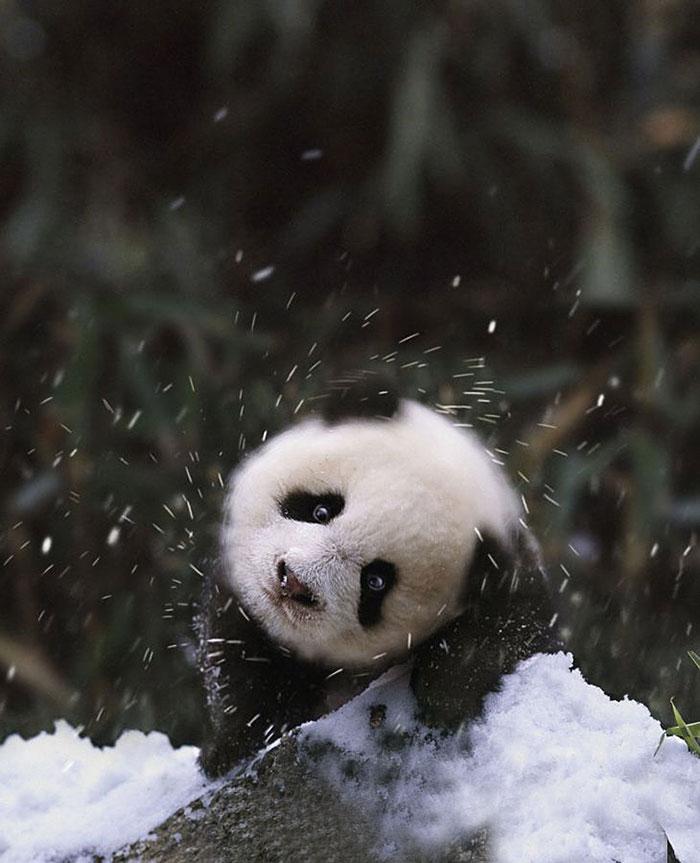 Animais brincando na neve pela primeira vez (3)