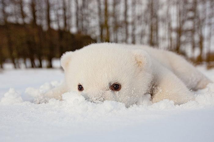 Animais brincando na neve pela primeira vez (5)