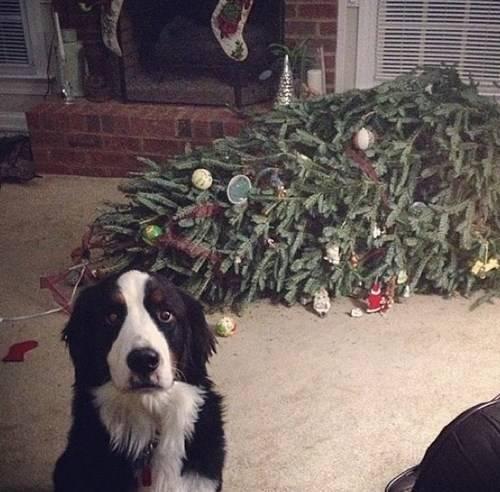 Animais-de-Estimação-VS-Decorações-de-Natal-Blog-Animal (1)