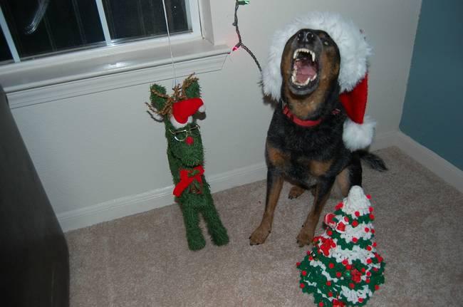 Animais-de-Estimação-VS-Decorações-de-Natal-Blog-Animal (12)