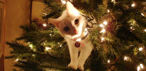 Animais-de-Estimação-VS-Decorações-de-Natal-Blog-Animal (3)