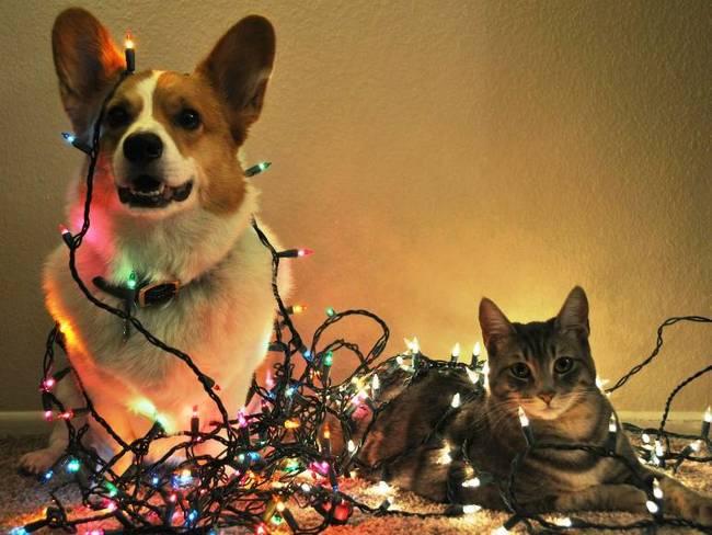 Animais-de-Estimação-VS-Decorações-de-Natal-Blog-Animal (4)